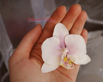 Phalaenopsis orchid on the clip