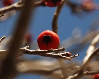 Winter Berry balancing on branch