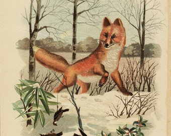 Antique Original  Natural History Colored Animal Print-   Fox - How To Fool a Fox