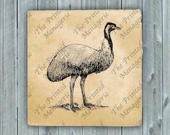 Emu Bird Digital Download for collages fabric iron on T-shirt transfer burlap pillows Vintage image Instant printable Australian Clip Art