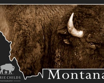Montana Postcard- Bison Sepia