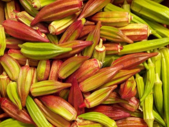 how to prepare okra seeds for planting