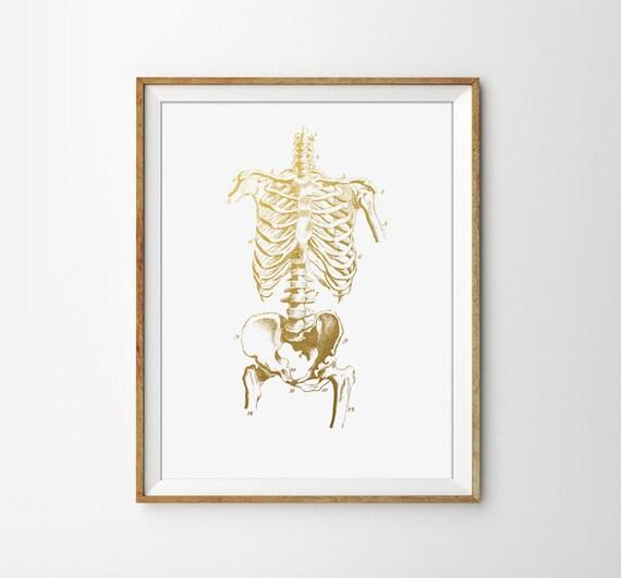 Etsy Gold Wall Decor : Skeleton poster human anatomy print medical doctor