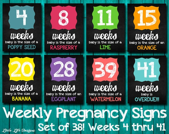 Weekly Pregnancy Signs Weeks 4-41. Pregnancy Week by Week.