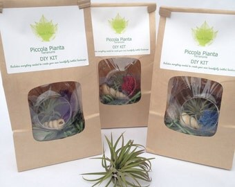 DIY Terrarium Kit, Airplant Terrarium Kit, Tillandsia Orb, Make Your Own Terrarium Kit, Terrarium, Terrarium Supplies, Hanging Airplant