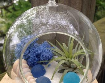DIY Terrarium Kit, Blue Moss Terrarium, Beach Terrarium, Airlant Terrarium, Hanging Terrarium, Reindeer Moss Terrarium, Terrarium, Favor