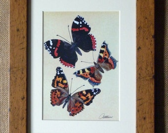 Butterfly Picture,Butterfly Art,Butterfly Print, Framed Butterflies Design - Red Admiral,Painted Lady & Small Tortoiseshell. A lovely gift!