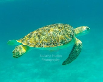 Sea Turtles - Rich turquoise waters capture these gentle sea creatures Water blue green wall art canvas nature ocean snorkeling diving