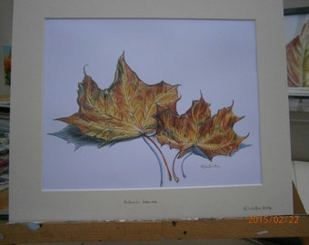 Mounted limited edition colour print of original drawing of Autumn Leaves