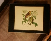 Set of 2 Lady Clare bird placemats