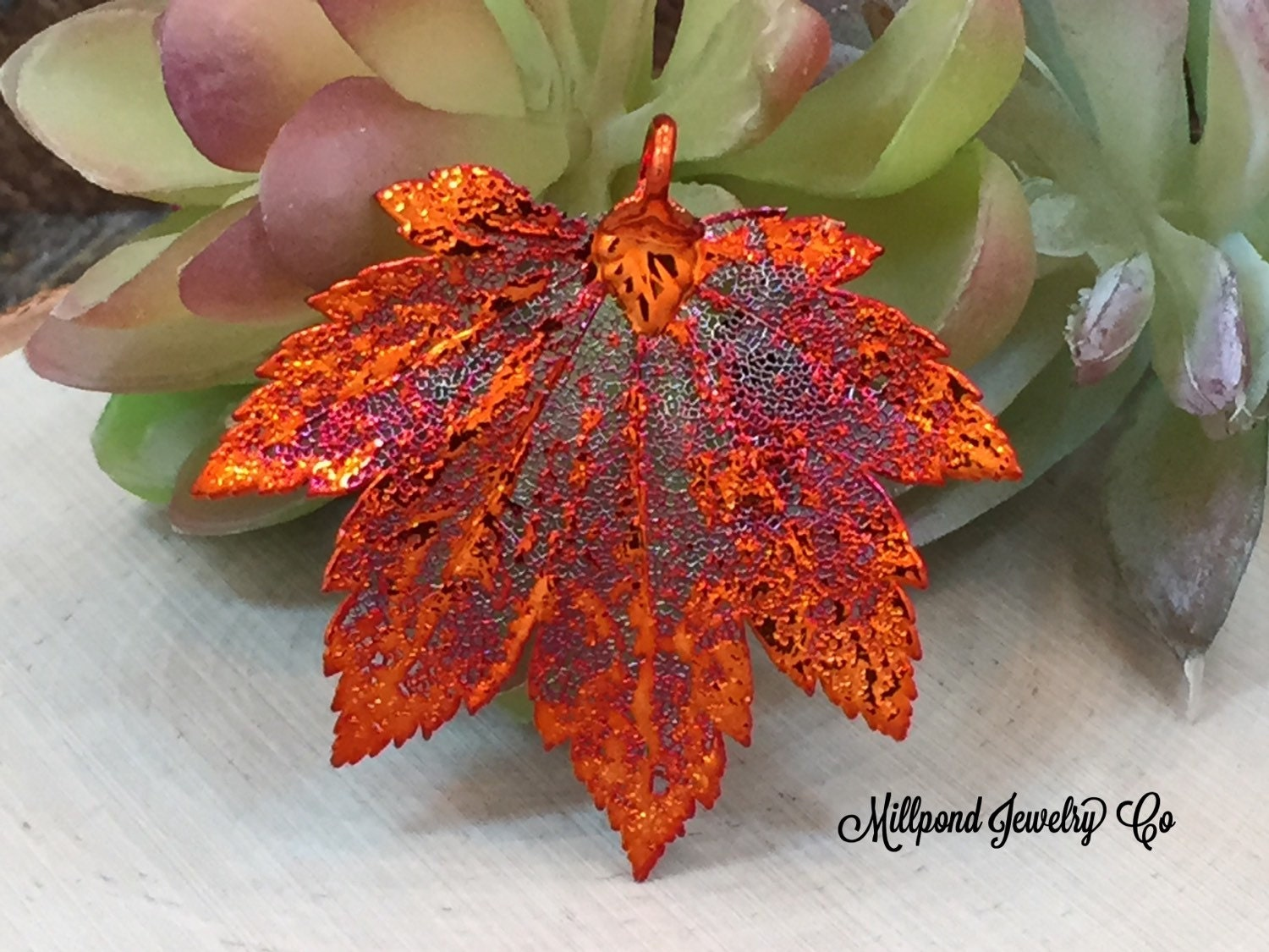 Autumn Acer Japonicum aconitifolium 'The Fern Leaf Full ... |Full Moon Maple Leaf