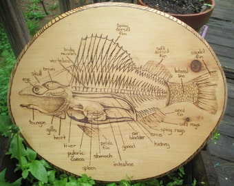 Fish Anatomy wood burning sign.