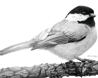 Chickadee drawing, 8x10 print