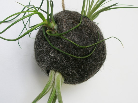 Air Plant Bubble Made from Llama Paper