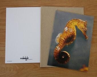 Seahorse Greeting Card - Blank Inside - Set of 6
