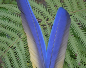 Feathers,Blue and gold macaw wing feathers Large or Small