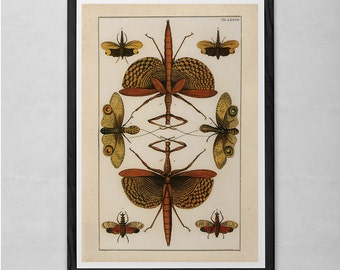 VINTAGE NATURE PRINT- Antique Nature Print - Antique Entomology Art Natural History Print Wall Art Nature Lovers Print Insect Art Print