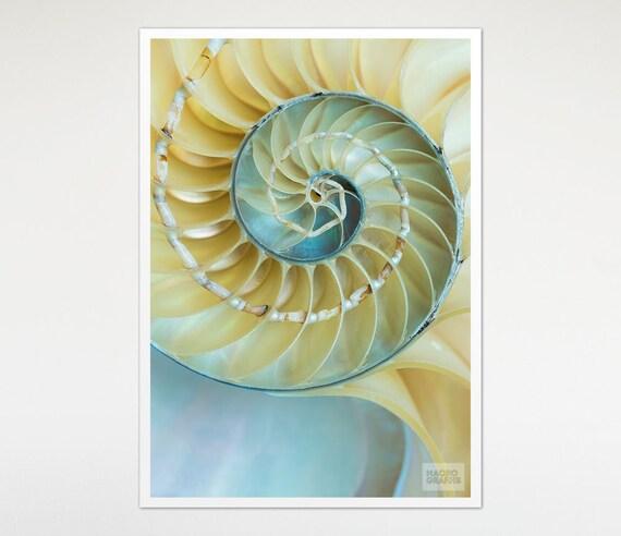 Art Print Nautilus Shell, Macro Photography, Nature Decor, Blue Yellow Print