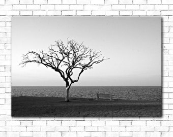 Canvas - Lonely Tree by Lake Pontchartrain - Gallery Wrapped Canvas - JK002