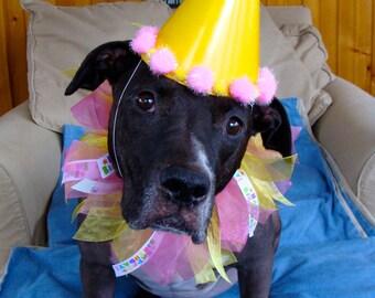 Happy Birthday Ribbon Dog Collar