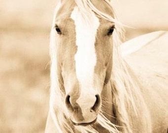 "Wild Horse Photo, Palamino, Horse Photo, Horse Print ""Blondie"""