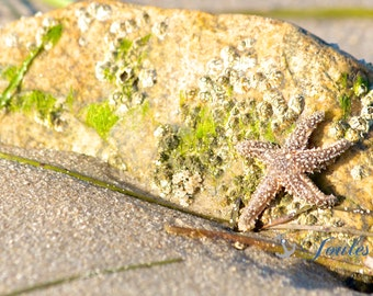 Stuck on You ~ Beach Photos, Starfish Photos, Shell Photos, New England, Nautical Photos, Coastal Decor,  New England Photos, Beach House