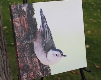 White-breasted Nuthatch Canvas Gallery Wrap