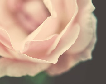 Digital download - Flower photography - Pale pink close-up rose flower