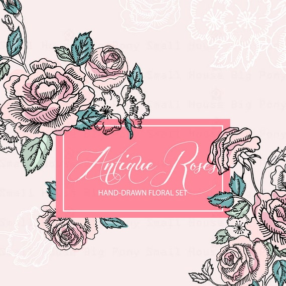Hand-drawn Floral Clipart: Antique Roses, hand drawn Clip Art/Rose/Individual PNG files/Hand Painted-Antique Roses