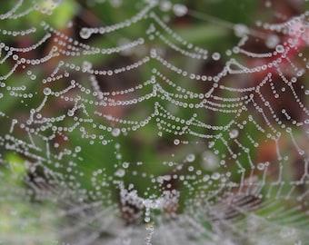 "Spider web photo blank greeting card, 5""x7"""
