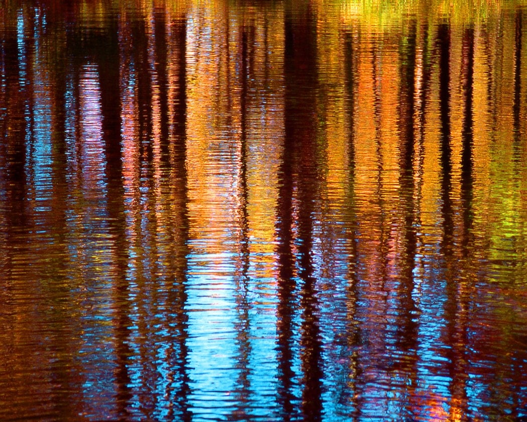 Colorful Tree Reflection In Water Fine Art Photography Wall
