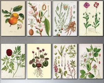A set of 8 Vintage Botanical Illustrations Fridge magnets,gardening, Victorian sketches