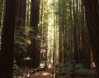 Path through Redwood Forest California Armstrong Park Fine Art Photograph Print Size 5 inches by 7 inches