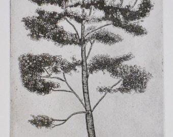 Etching Aquatint, Aspen Tree
