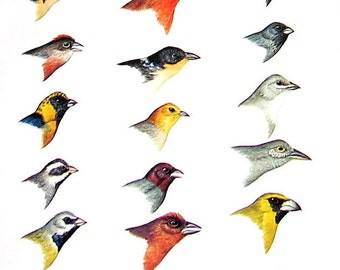 Small Bird Print - Bird Heads - Crimson Tanager, Yellow Faced Grassquit, Finch  - South American Birds - 1970 Vintage Book Page - 9 x 6