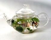 "Mini Glass Teapot ""Green Tea"" Marimo Moss Ball Aquarium Terrarium"