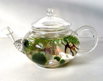 "Mini Glass Teapot ""Green Tea"" Marimo Moss Ball Aquarium Terrarium"