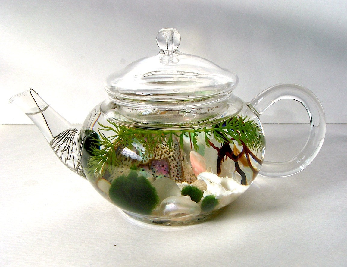 mini glass teapot green tea marimo moss ball. Black Bedroom Furniture Sets. Home Design Ideas