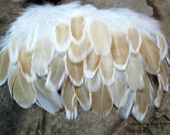 "Real Feathers Natural Feathers Loose Feather For Crafts Ready To Ship Buff Laced Polish Hen Feathers Real Bird Feathers 25 @ 3 - 3.5"" / 2378"