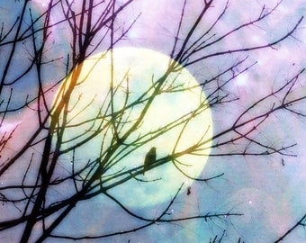 Bird in the Moonlight Fine Art Photograph, 8 by 8 or 8 by 10, bird, tree, silhouette, moon, spring, blue, purple, black, nature, night sky