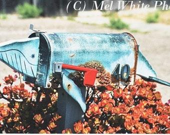 animal mailbox photo greeting cards assortment of photo greeting cards