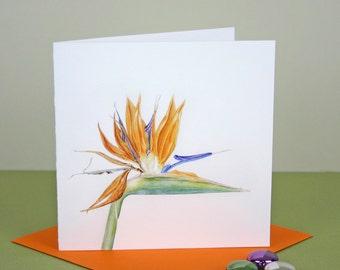 Botanical Card-Bird of Paradise illustration-Strelitzia print-Flower Greetings Card-Birthday Card-Botanical Watercolour-Exotic Flower print