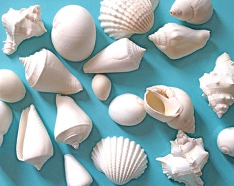 "Seashells - White Mix - 1 lb. (about 65 pcs.) 1"" - 2"" Natural Seashells - Sea Shells Beach Weddings Parties Table Decor Bulk Shells Nautical"