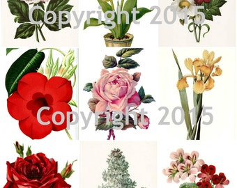 Printable Victorian Flowers Collage Sheet 102.  Instant Digital Download,  Flowers, Scrapbook Embellishments
