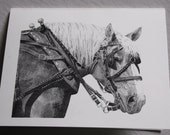 Belgian draft horse note cards
