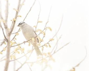 Nature Photograph, bird art print, white grey wall art, home decor, color, white, neutral, minimalist, rustic, haze, wall decor, yellow art