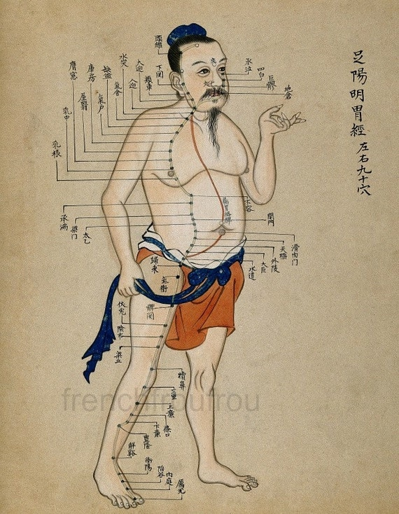 antique chinese acupuncture chart illustration anatomical