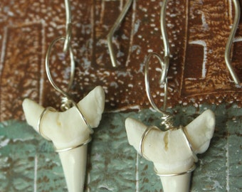 "Shark Week!! Cute White Shark Teeth Earrings - 3/4"" Wire Wrapped Creamy White Shark Tooth for your Valentine Gifts -1-STE"
