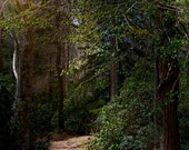 CAPE COD Photography ~ SANDWICH Massachusetts Heritage New England Travel Nature Landscape Woodland Trees Scenic Liz Thomas