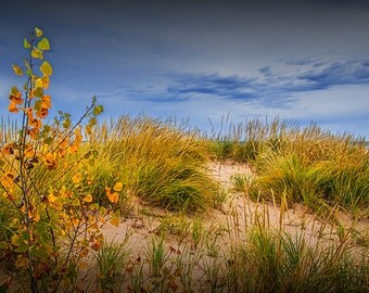 Beach Sand Dune with Grass on the Lakeshore of Lake Michigan by Little Sable Point Michigan No.1026 - A Fine Art Seascape Nature Photograph